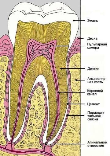 Зуб 1