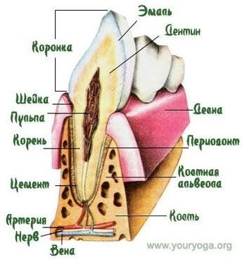 Зуб 4