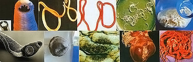 арина никитина очищение от паразитов